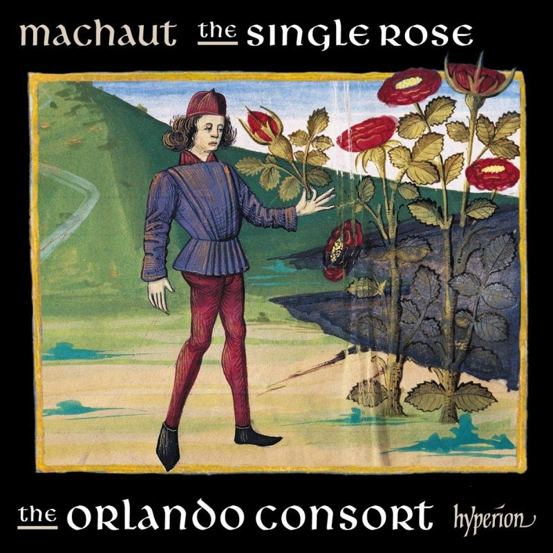 Review of MACHAUT The Single Rose